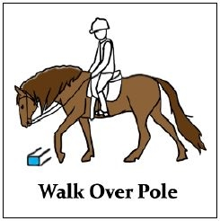 Equestrian PEC card